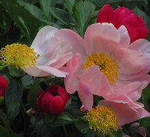 """""""Red and Pink Flowers"""" by dfrahm"""