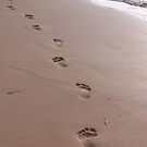 Footprints in the Sand by AnitaHavel