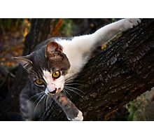 CAT CLIMBING TREE Photographic Print