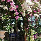 bougainvillea by richard  webb