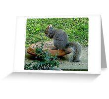 Grey squirrel - free lunch ! Greeting Card