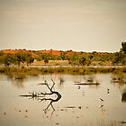 Indinda Swamp - Old Andado, Northern Territory by Stephen Permezel