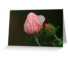 Pavonia hastata Greeting Card