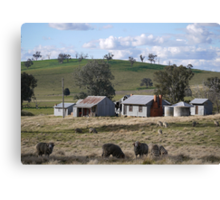 Ye Olde Aussie Shearing Quarters Canvas Print