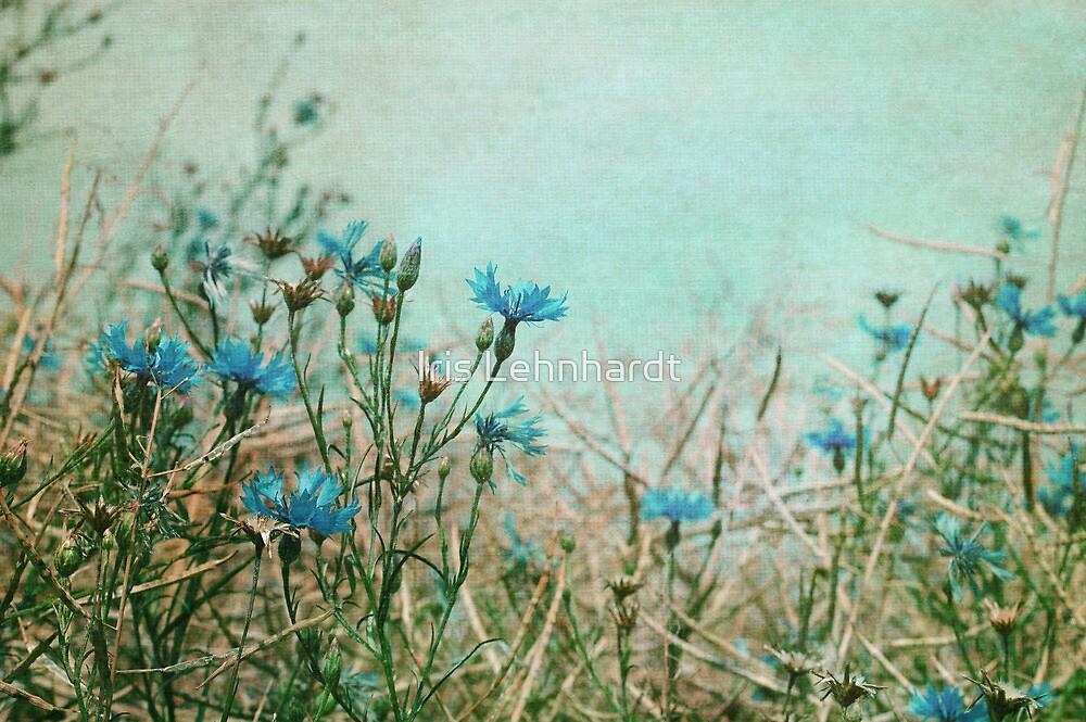 field impression by Iris Lehnhardt