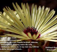 Bokbaai-fraai by Rina Greeff