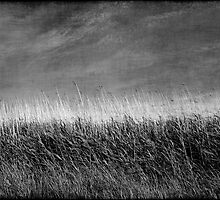 Nature in black and white I by Anne Staub
