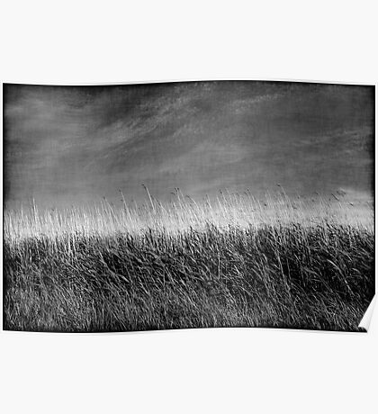 Nature in black and white I Poster