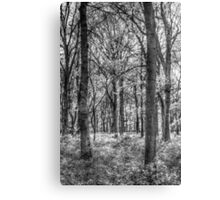 The Peaceful Forest Canvas Print
