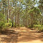 Boranup Forest #4, Margaret River, Western Australia by Elaine Teague