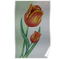 Watercolor Tulips Poster