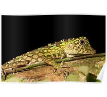 Green Tree Lizard Poster
