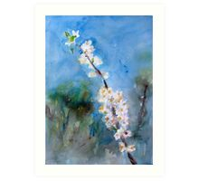 Spring flower white awakening fragrance - lovely gift Art Print