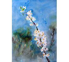 Spring flower white awakening fragrance - lovely gift Photographic Print