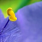 Single Stamen: Spiderwort by paintingsheep