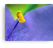 One Single Stamen: Spiderwort Canvas Print