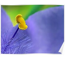 One Single Stamen: Spiderwort Poster