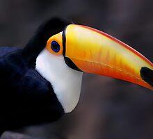 Toucan bird by ARTPICSS