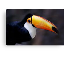Toucan bird Canvas Print