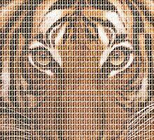 Tiger, Tiger by Gary Hogben