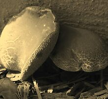 Mushrooms in Sepia - South Florida by Glenn Cecero