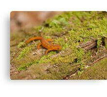 Red Eft in Spring Canvas Print