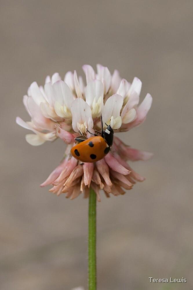 Ladybird in the garden by Teresa Lewis