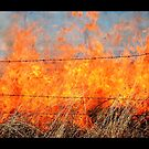 Grassy Burn by William Hallatt