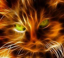 Cat's Eyes by jean-louis bouzou