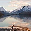 From a robin&#x27;s point of view Snowdonia Wales by almaalice