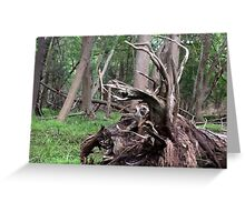 Naturescape 65 Greeting Card