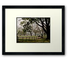 Texas cow pasture Framed Print