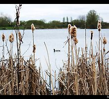 Rushes by Mike Baker