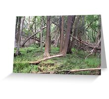 Naturescape 67 Greeting Card