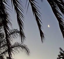 South African Night Sky by Lynn Bolt