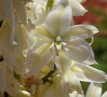 yucca by vigor