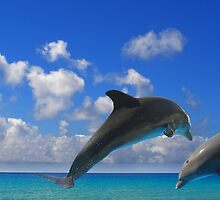 Jumping Dolphins by Manuel Fernandes