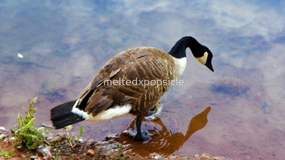 Goose Reflection by Jessica Liatys