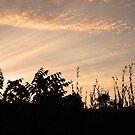 Sunset by Jessica Liatys