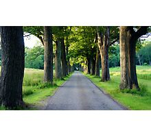Tree Grove Photographic Print
