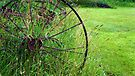 Wagon Wheel by Jessica Liatys