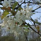 Blossom at its best and as is! by MaryMina