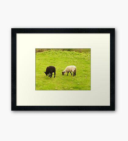 Best friends. Framed Print