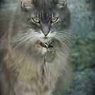 Cat eyes by DreamCatcher/ Kyrah