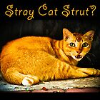 Stray Cat Strut? by Webitect