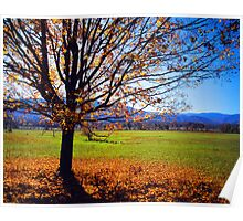 MAPLE TREE,CADES COVE Poster