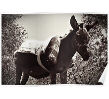 Black and White Donkey Poster