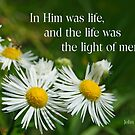 In Him was life ~ John 1:4 by Robin Clifton
