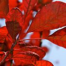 Red Leaves by Lou Wilson