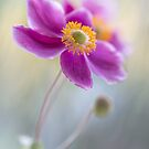 Autumn colour by Mandy Disher
